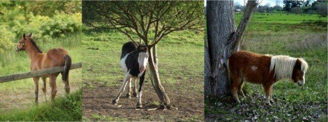 Een sober rantsoen voor paarden die schuren